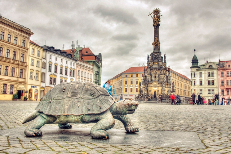 Turtle in the square