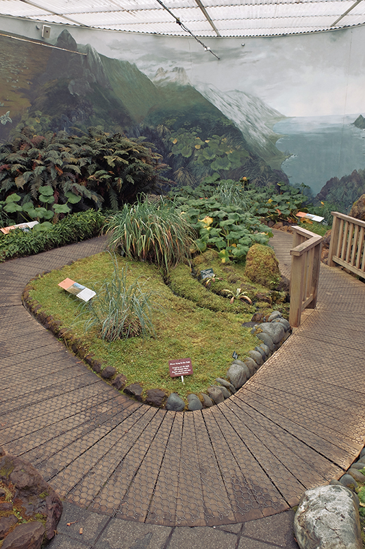 Inside the Subantarctic Plant House with it's fragile displays inside a nicely decorated room complete with the sounds of the region's fauna.