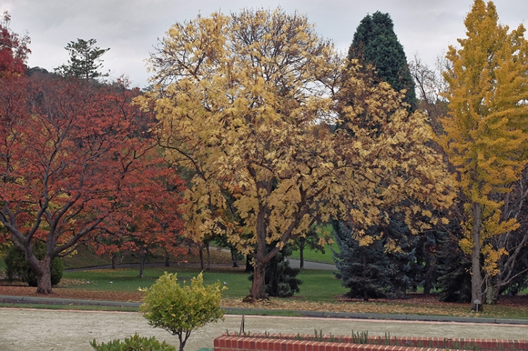 Autumnal hues abound throughout the garden's tree covered open areas.