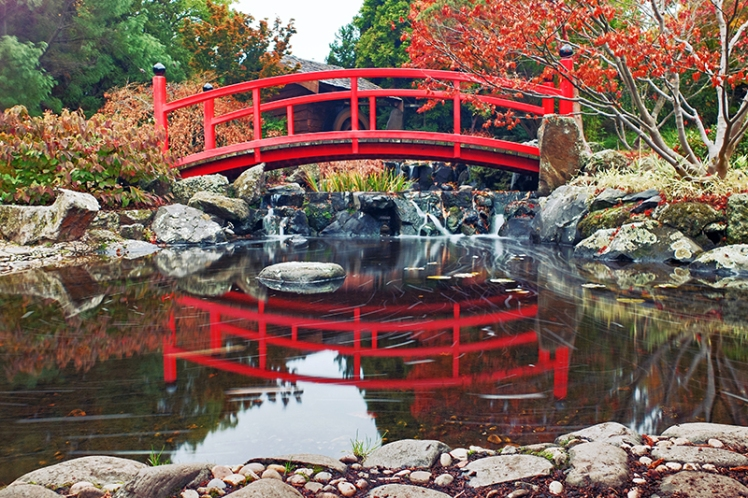 No Japanese Garden can hold its head high when it goes to the Japanese Garden AGM unless it has a red bridge. FACT