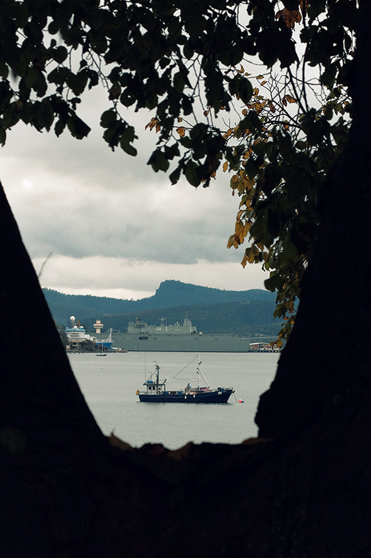 HMAS Canberra is seen through the branches of a tree along Sandy Bay Road.