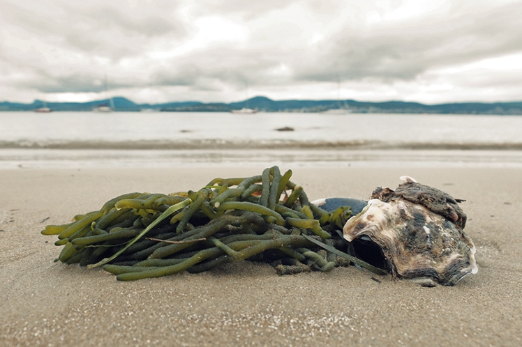 There's often a handful of interesting debris washed ashore after a high tide.