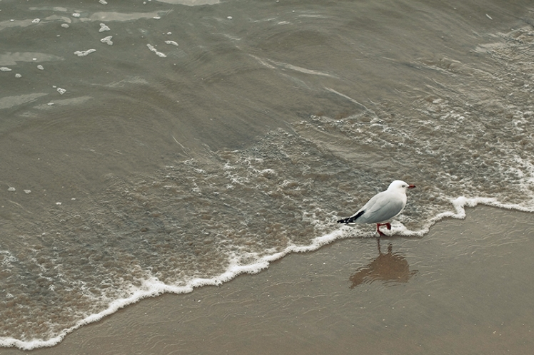 A seagull gives its feet a wash in Little Sandy Bay.