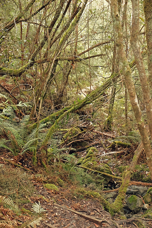 The jungle like environment surrounding Cartwright Creek is a far cry from the dryer Eucalyptus trees higher up.