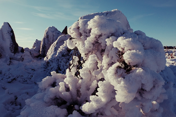 The plants on the summit are almost completely lost in their snowy blankets.